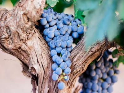 Les vins de la sélection Bernard Marty